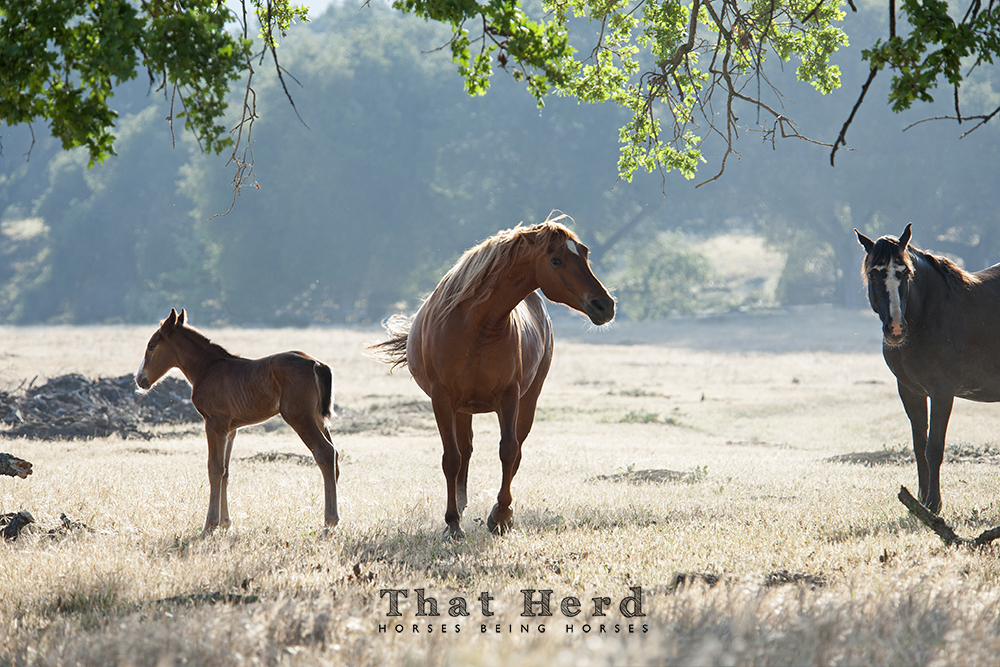 wild horse photography a new mother warns another mare to stay away from her newborn