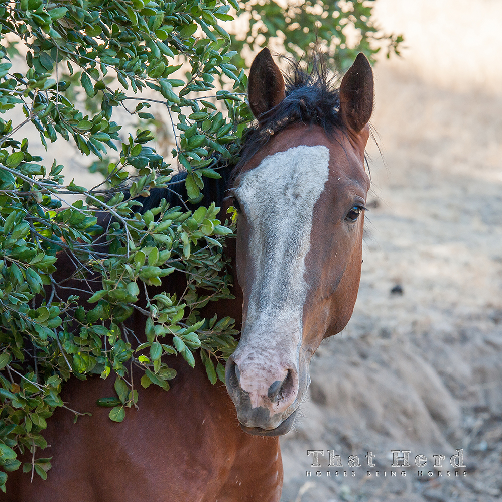 wild horse photography portrait of a young horse covered in grime and burrs