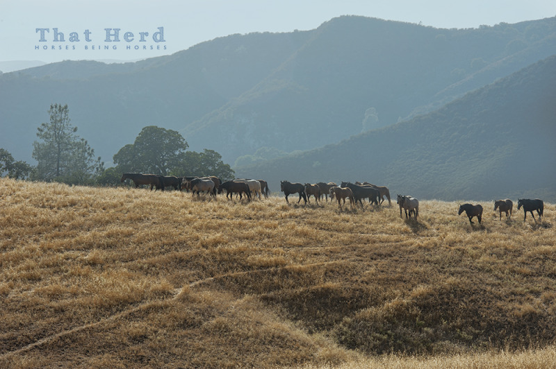 wild horse photography of herd on grassy hill with scenery