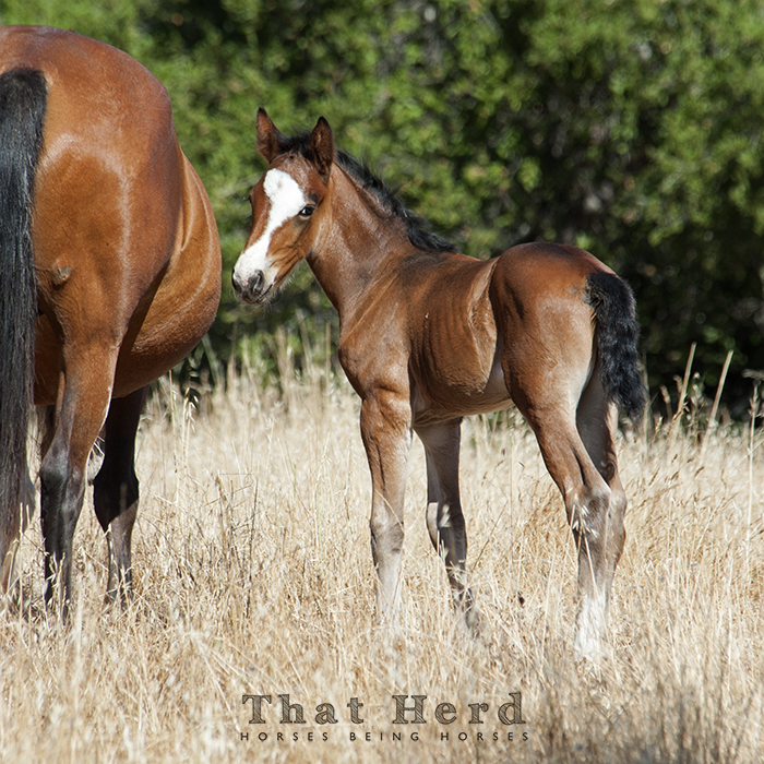 wild horse photography of a foal with unusual face marking