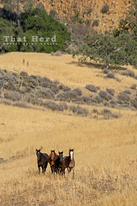 wild horse photography of horses in a landscape
