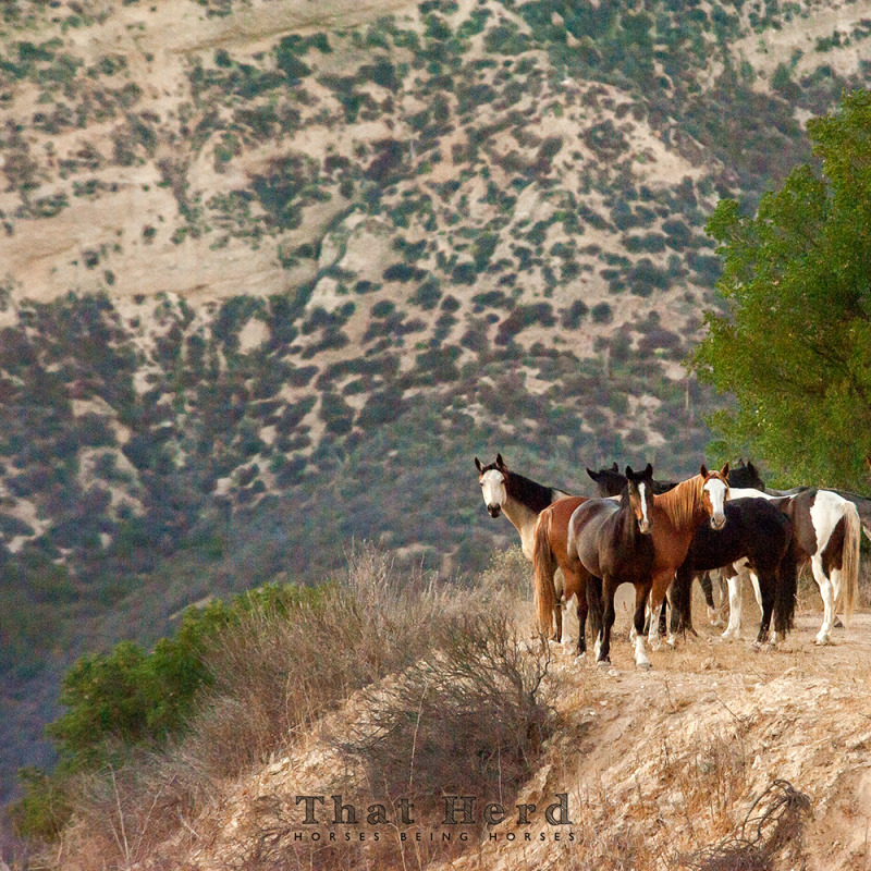 wild horse photography of horses in a precarious landscape