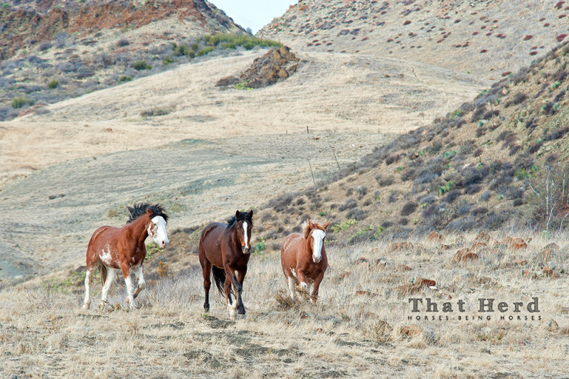 wild horse photography of three colorful horses in a landscape
