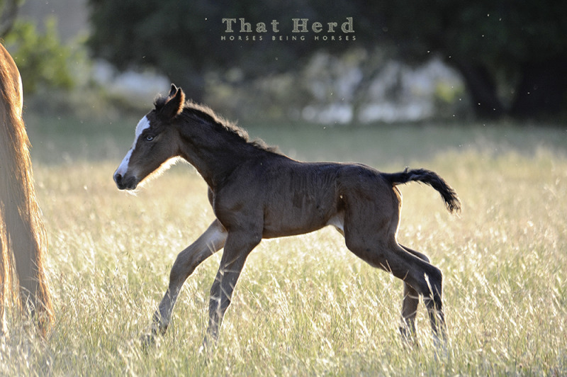 wild horse photography of a newborn foal backlit by afternoon light