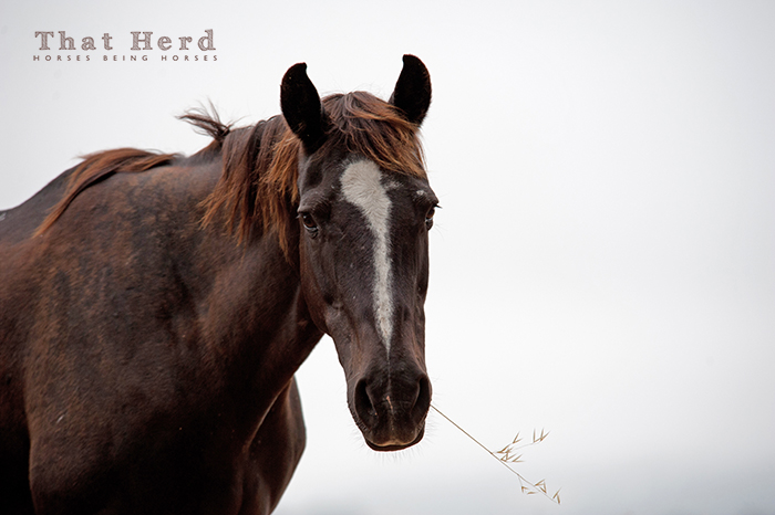 wild horse photography portrait of an old mare