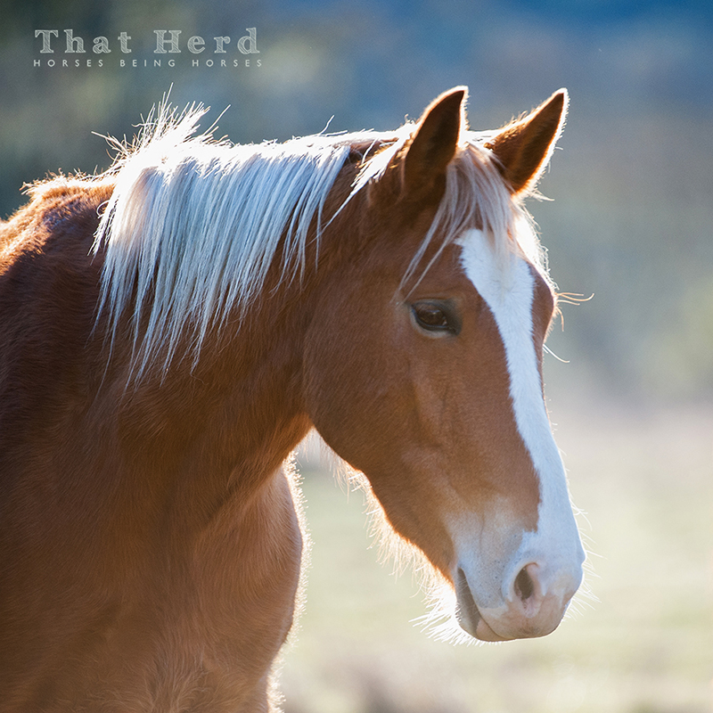 wild horse photography portrait of a beautiful young mare