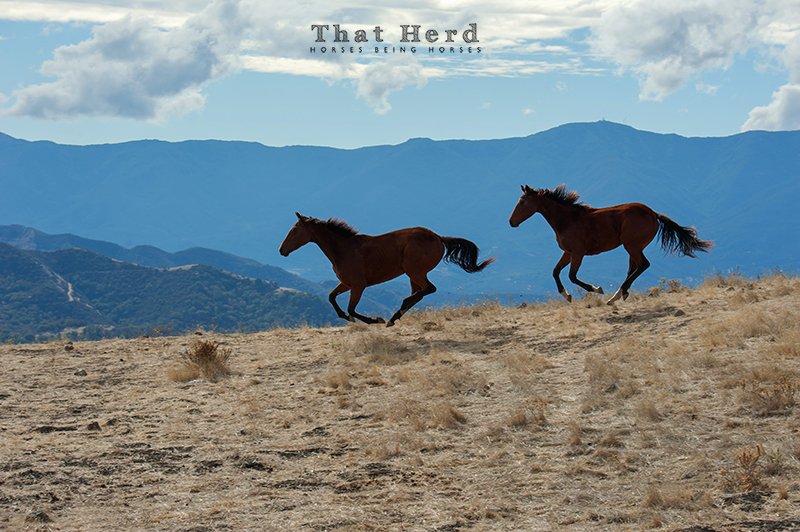 wild horse photography of two horses galloping through a mountain landscape