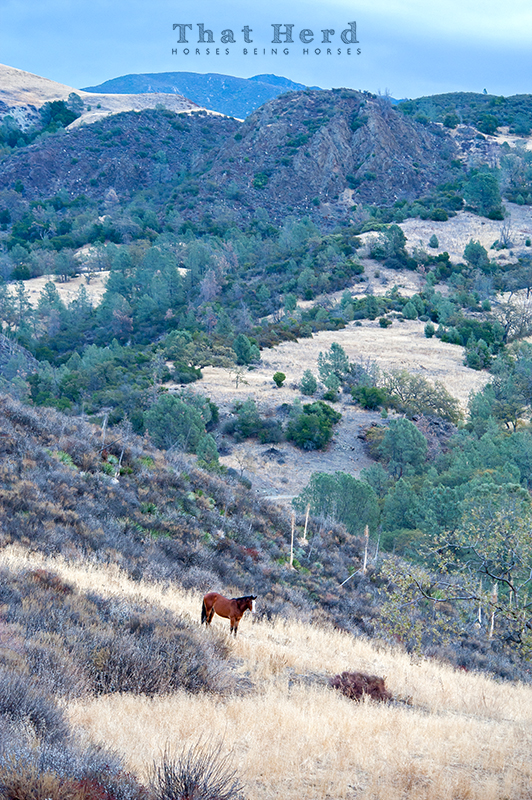 wild horse photography of a beautiful landscape and a lone horse