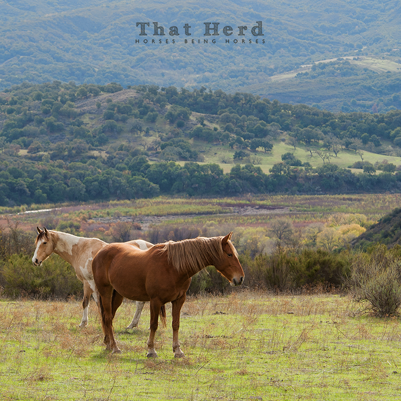 wild horse photography of two horses in a layered landscape