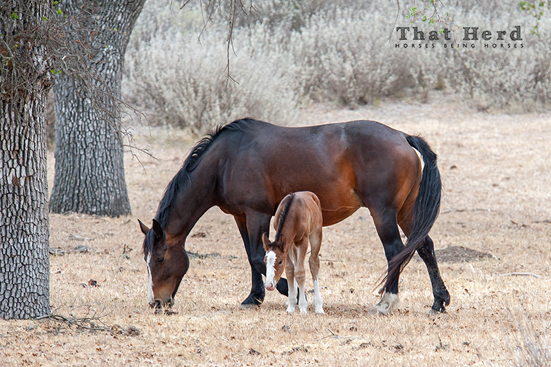 wild horse photography of a mare and newborn foal