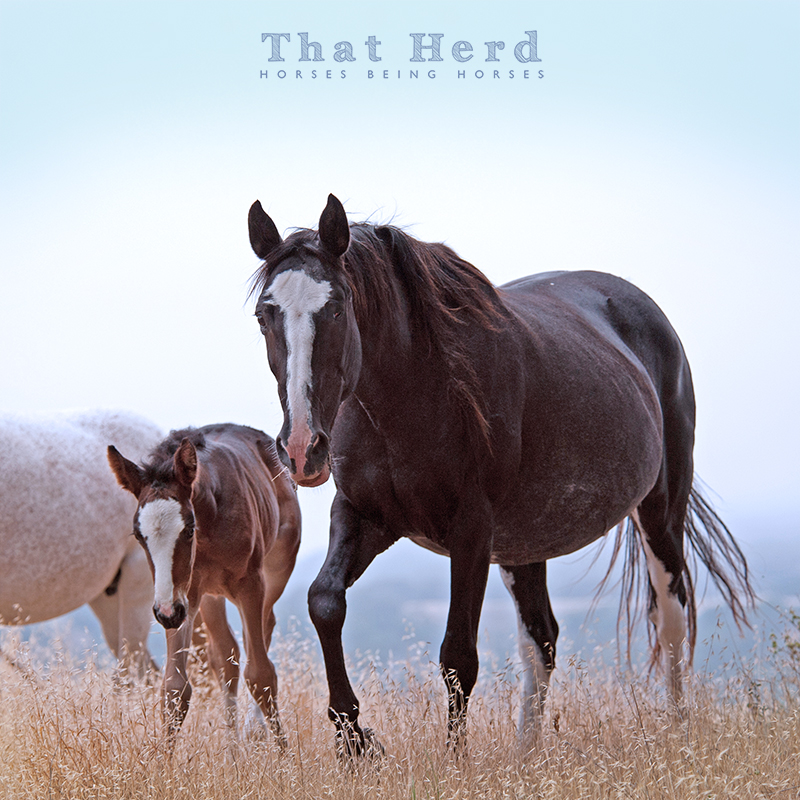 wild horse photography of a one eyed mare and her foal