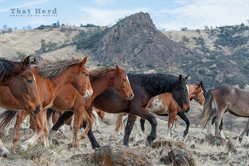 wild horse photography of a parade of yearlings in a rocky landscape