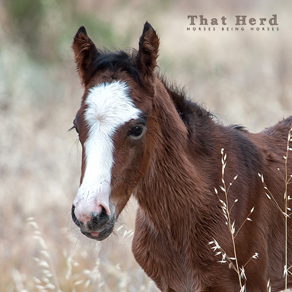 free range horse photography of a June rainy day newborn