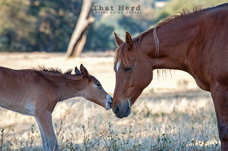 wild horse photography of a newborn bonding with her mother