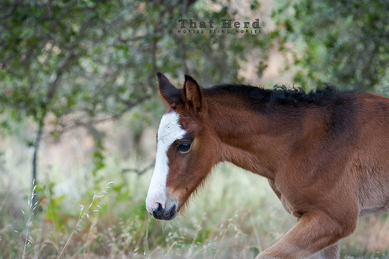 wild horse photography of a beautiful young foal