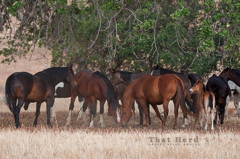 wild horse photography of a mare and stallion communicating