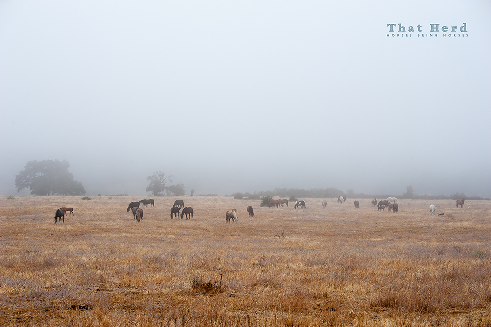 wild horse photography of an early morning glimpse at the herd