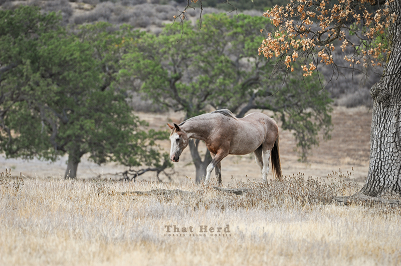 wild horse photography of an old, old mare