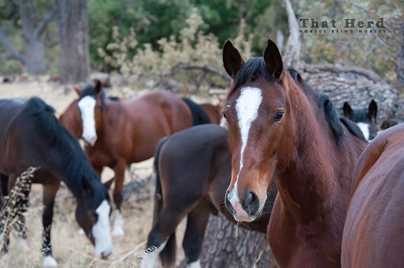 wild horse photography of young horses relaxing