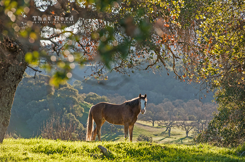 wild horse photography of a filly bathed in morning light with scenery