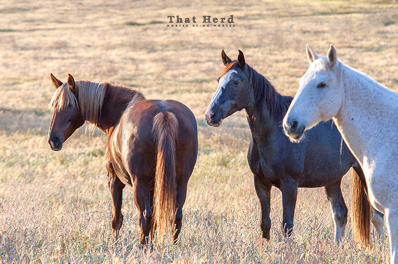 wild horse photography of a few That Herd mares