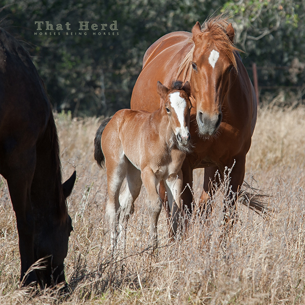 wild horse photography of a mare and filly showing social dominance