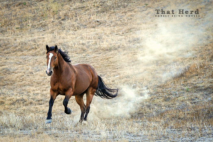 wild horse photography of a horse galloping down a hillside