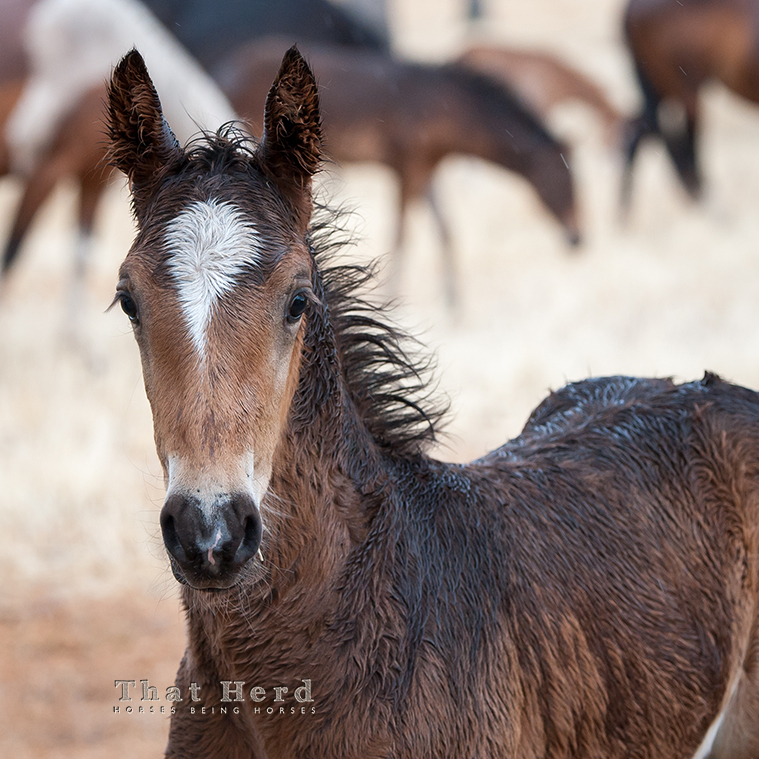 wild horse photography of an independent colt