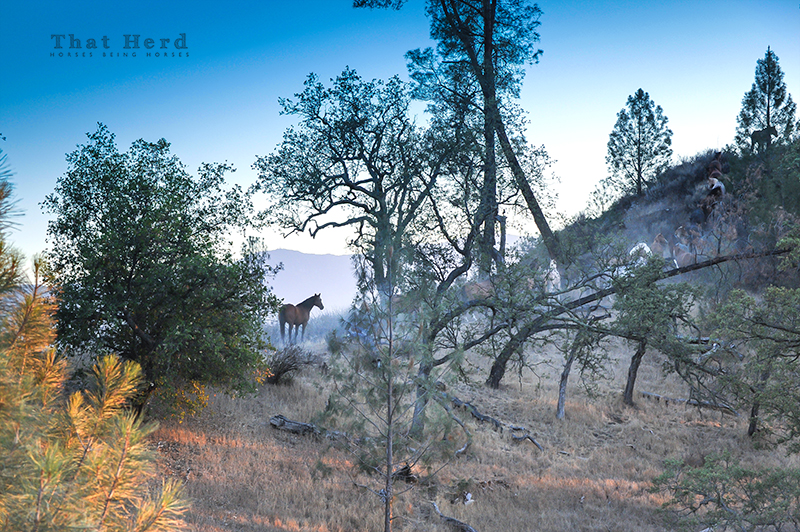 wild horse photography of a group of horses traveling in steep terrain at sunset