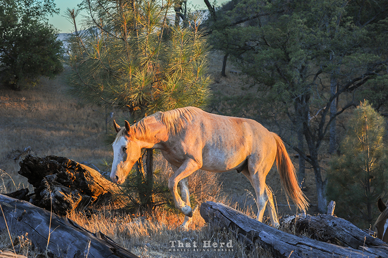 wild horse photography of a young horse moving through a wooded area