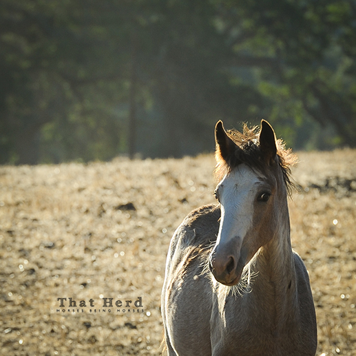 wild horse photography of an independent filly