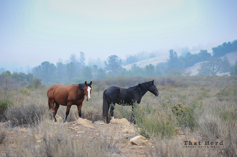 wild horse photography of two yearlings in foggy scenery