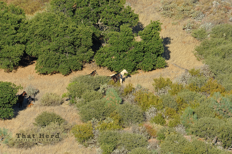 wild horse photography of horses hiding in brush
