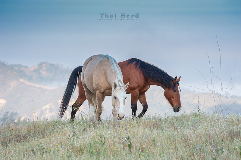 wild horse photography of two horses on a grassy mountaintop