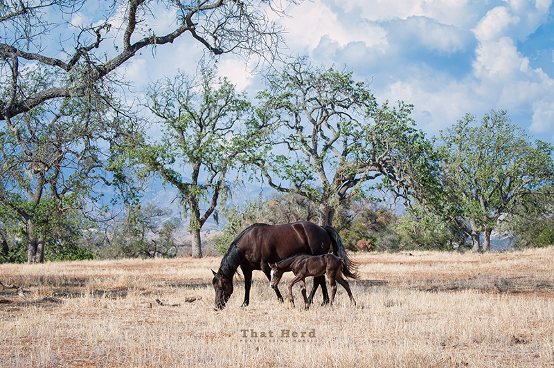 wild horse photography of a mare and foal in a tree-lined clearing