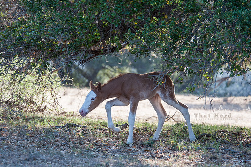 wild horse photography of a newborn foal crouching under branches