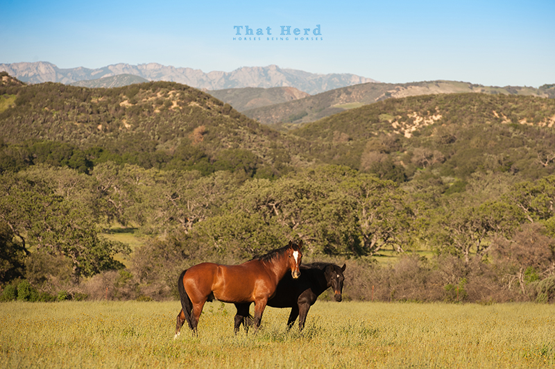 wild horse photography of two horses in a lovely landscape