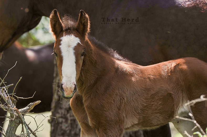 wild horse photography of a newborn colt