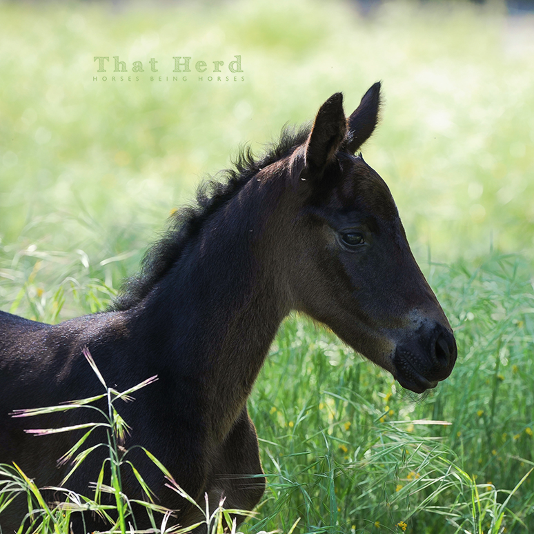 wild horse photography of a new foal in tall grass