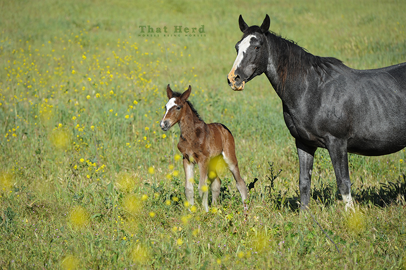 wild horse photography of a mare and newborn foal in matching pose