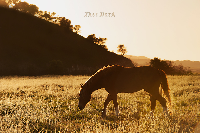 wild horse photography of a colt in the last light of the longest day