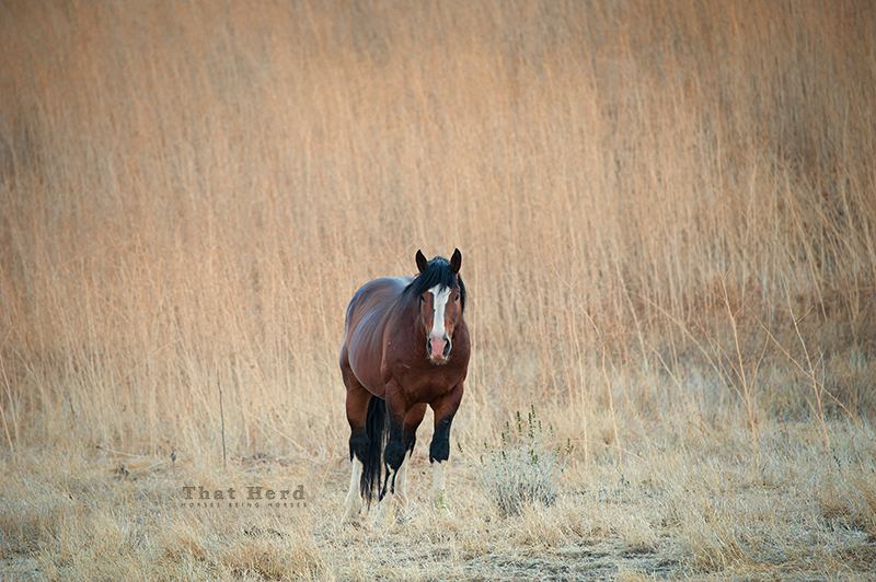 wild horse photography of a stallion in a parched landscape
