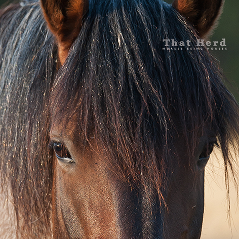 wild horse photography portrait of an intelligent mare