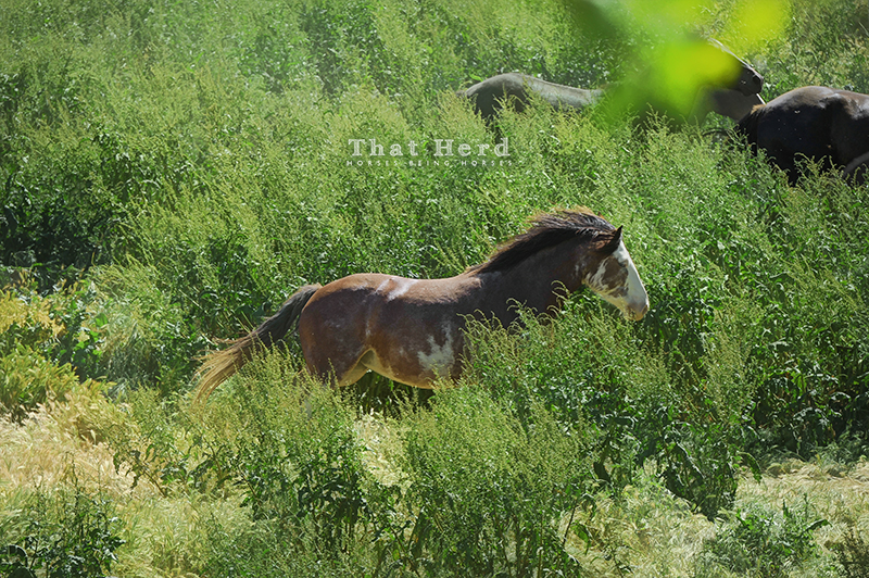 wild horse photography of horses galloping by through brush