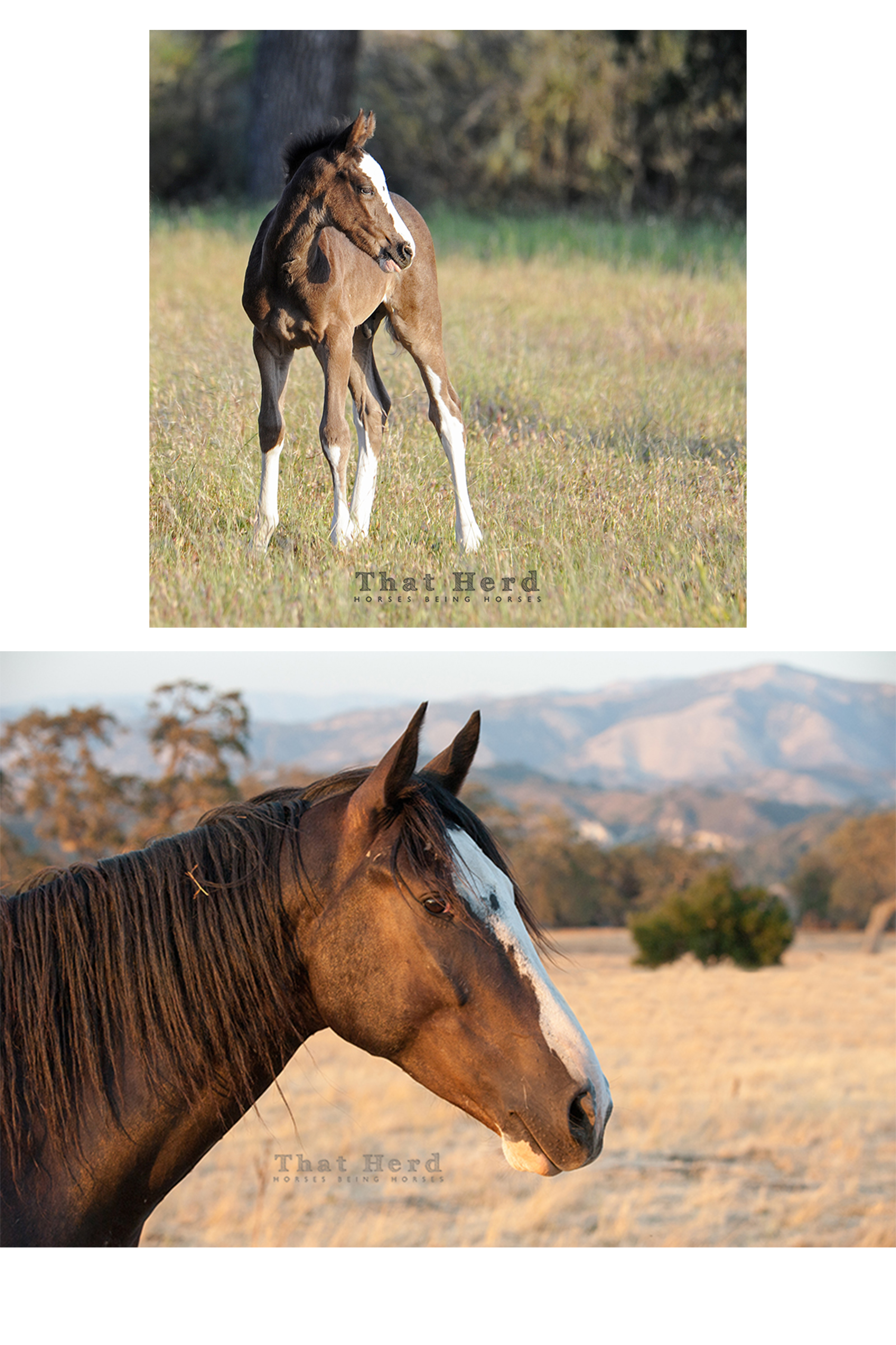 wild horse photography showing the same colt four years apart