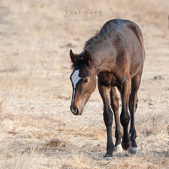 wild horse photography of a sweet-faced colt