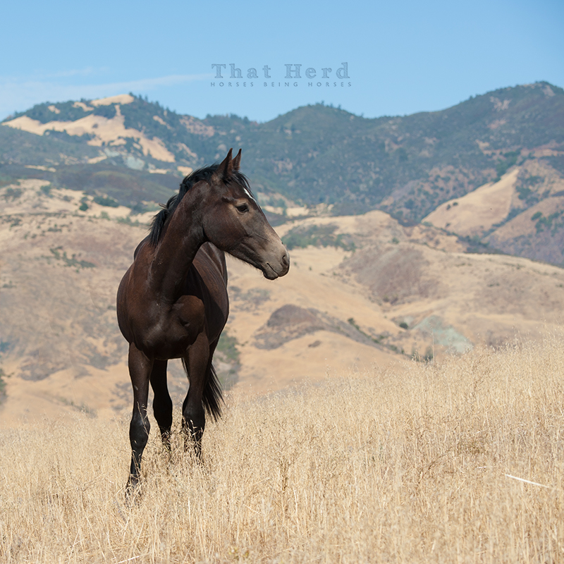 wild horse photography of a yearling colt in scenery