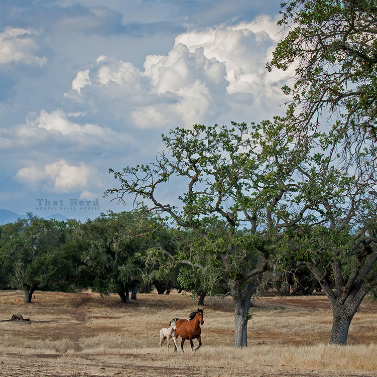 wild horse photography of a mare and foal in summertime scene