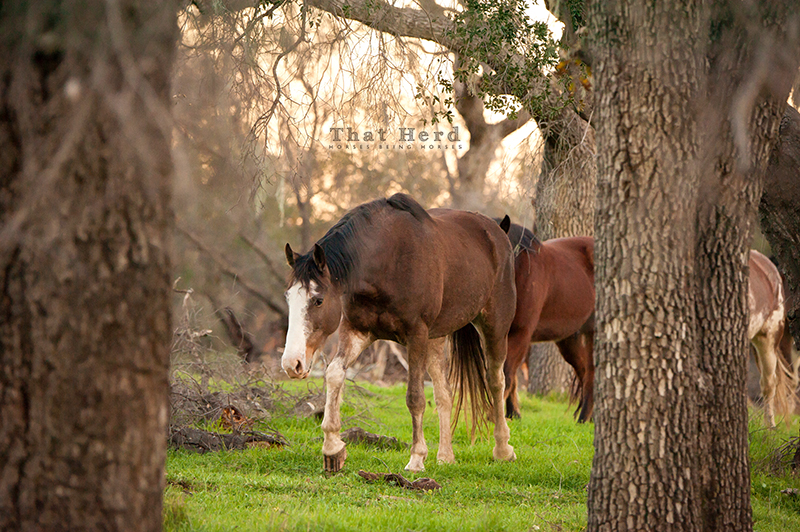 wild horse photography of horses in the woods