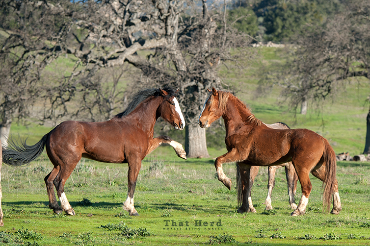 wild horse photography of two colts greeting